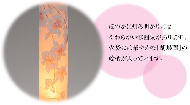 峰(みね) 桃色 胡蝶蘭 コードレス(一個)