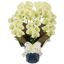 胡蝶蘭 5本立ちお供え花 アートフラワー(造花)グリーン